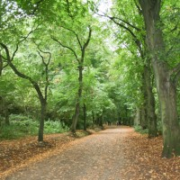 Visiting Hampstead - Hampstead Heath